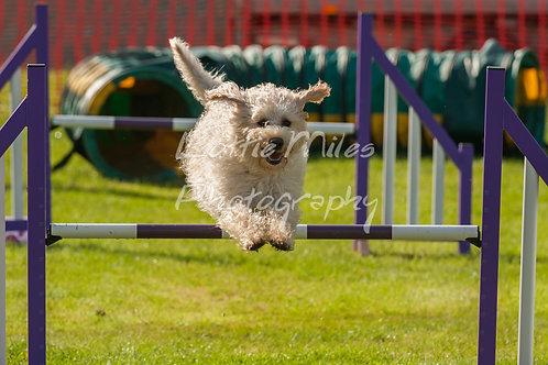 Dartmoor DTS Merton Show-34