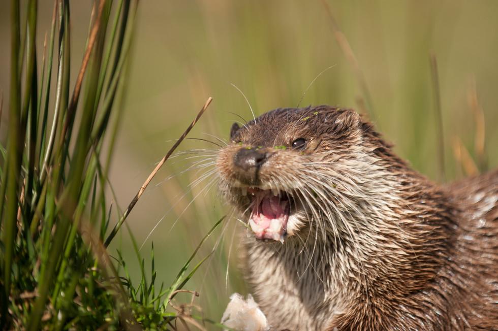 Otter-1.jpg
