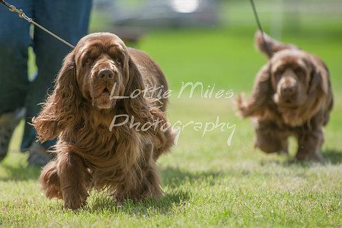 Paignton Dog Show-22