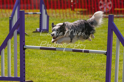 Dartmoor DTS Merton Show-92