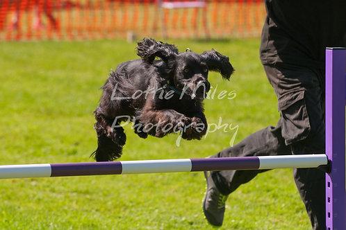 Dartmoor DTS Merton Show-126
