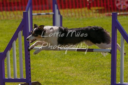 Dartmoor DTS Merton Show-89