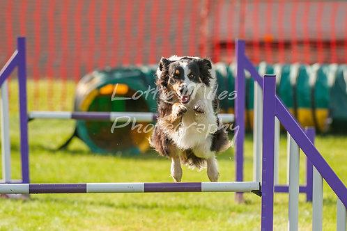 Dartmoor DTS Merton Show-8