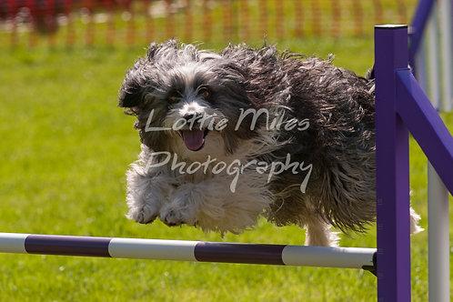 Dartmoor DTS Merton Show-97
