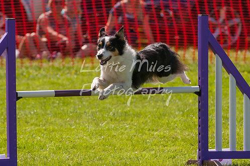 Dartmoor DTS Merton Show-88