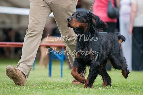 Paignton Dog Show-15