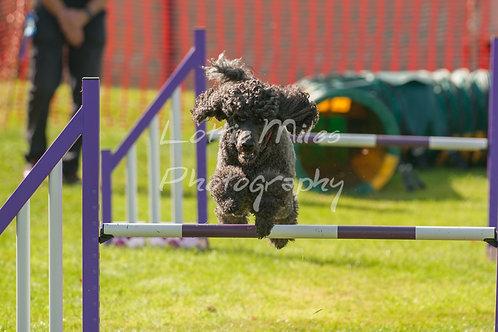 Dartmoor DTS Merton Show-29