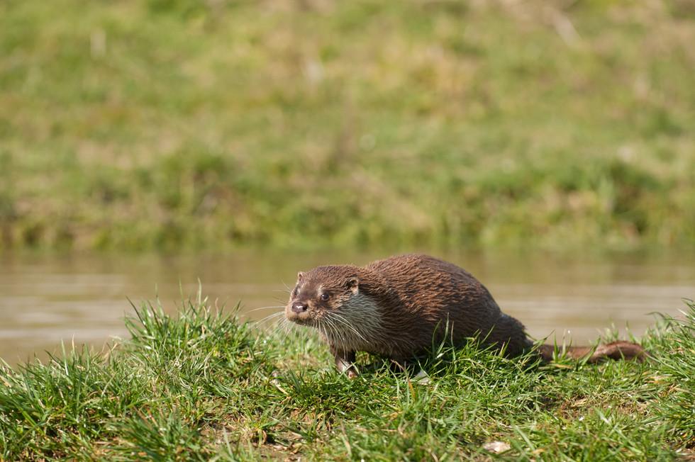 Otter-1-6.jpg