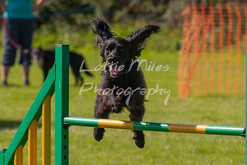 Dartmoor DTS Merton Show-139