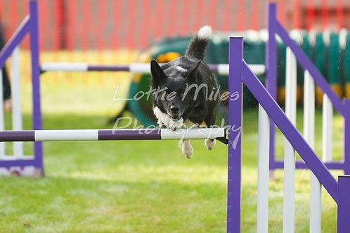 Dartmoor DTS Merton Show-5