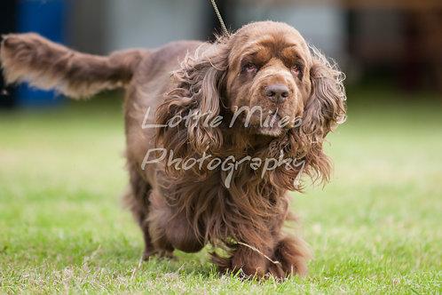 Paignton Dog Show-19