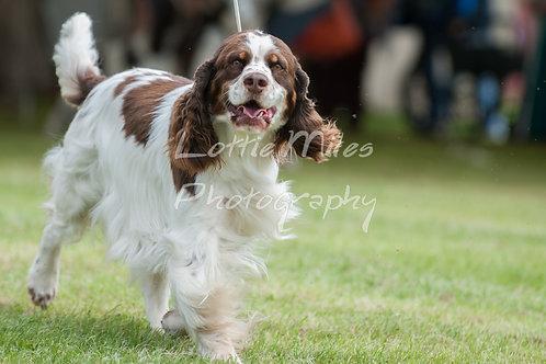 Paignton Dog Show-16