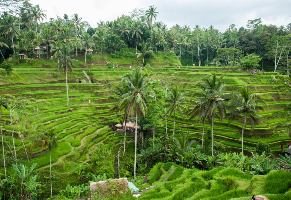 Bali - Ubud-183.jpg