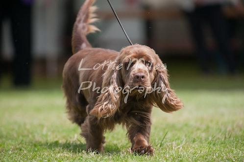 Paignton Dog Show-21