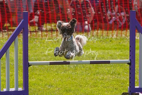 Dartmoor DTS Merton Show-115