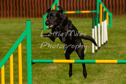 Dartmoor DTS Merton Show-57