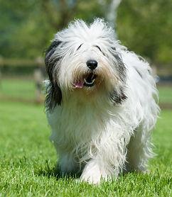 Dog Agility Photos