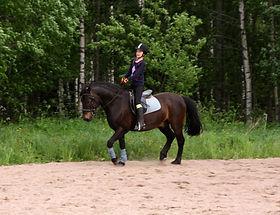 Monipuolinen liikutus pitää hevosen hyvässä lihaskunnossa