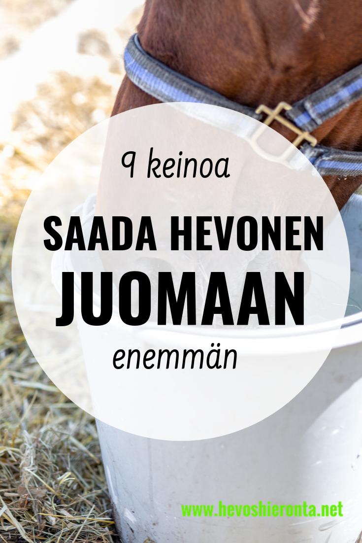 9 keinoa saada hevonen juomaan enemmän
