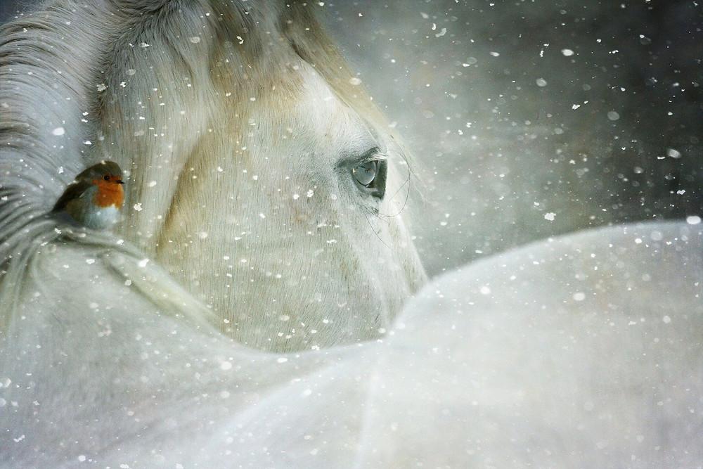 5 asiaa, jotka siun tulee tietää ennen omen hevosen hierontaa