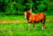 horse-2340885_1920.jpg