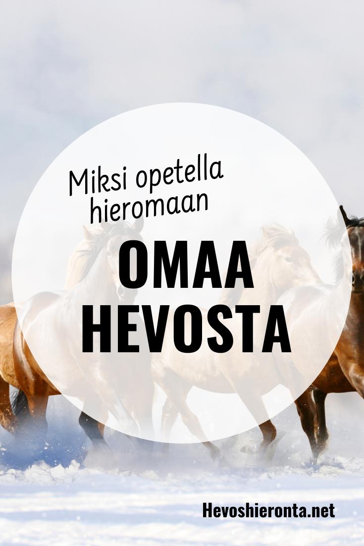 Miksi opetella hieromaan omaa hevosta