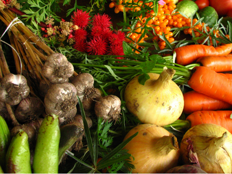 Healthy Food Systems – The Importance of Local Food