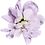 Flowers-Pink-12.png