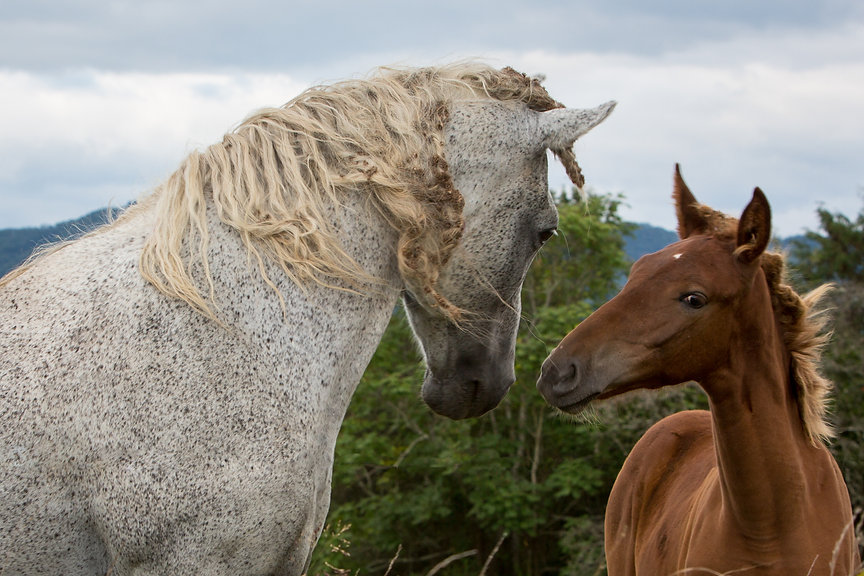 2020 4-27 Horses wild fence removed TN F