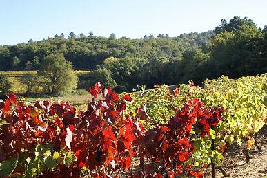vignes rouges.jpg