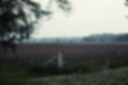 Screen Shot 2020-03-19 at 10.24.35 AM.pn