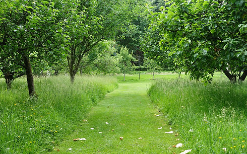 Scenic View of a Mowed Grass Path throug