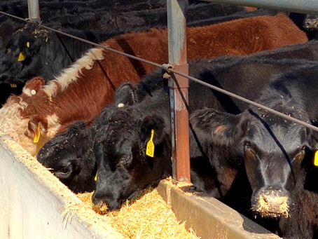 NFAS accredited feedlot located in Cataby W.A