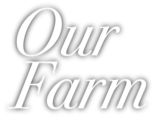 Our Farm.png