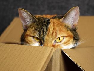 הסוד המופלא בחתול של שרדינגר