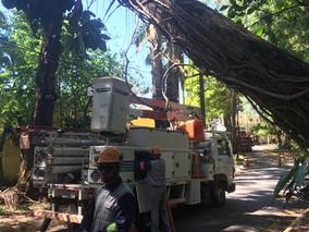 Defesa Civil remove eucalipto caído de via central do bairro