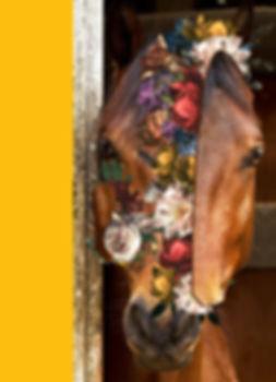horse face new 3.jpg