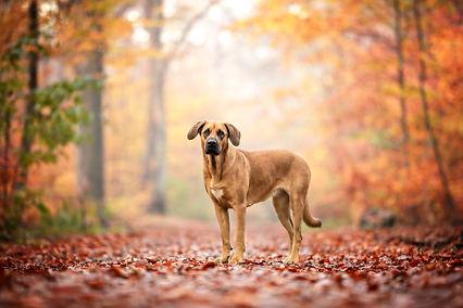 Hundefotografie Berlin