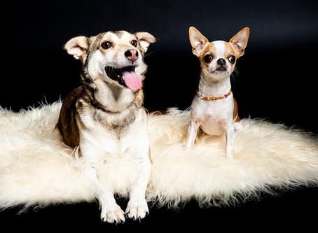 Mailo und Jolie - zwei süsse Vierbeiner vor der Linse