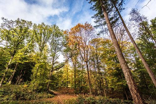 FOREST TERVUREN, 2018