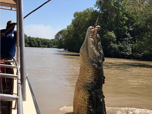 big croc 1.jpg