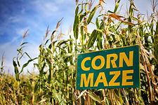 cornmazing.jpeg
