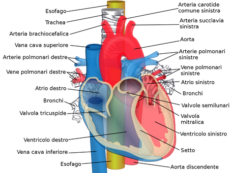 L'alimentazione come cura per l'Ipertensione