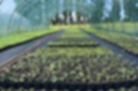 Rośliny_łąkowe_w_doniczkach_(wild_flo
