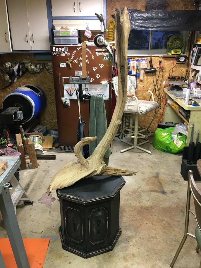 Custom Base Work By Bird Zone Taxidermy Driftwood On Octagon Base