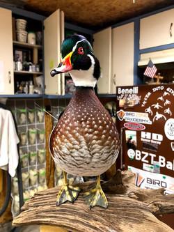 Woodie Drake By Bird Zone Taxidermy