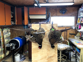 Dead Mount Hanging Pheasants