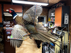 Best Flying Pheasant Mount