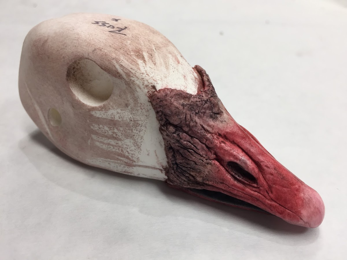 Ross Goose Painted Head by Bird Zone