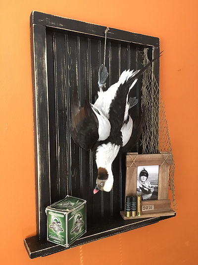 Old Squaw Drake Dead Mount, Best Long Tailed Duck Dead Mount, Shadow Box Dead Mount Display For Old Squaw Drake, Stud Drake Old Squaw, Diver Duck Dead Hanging Mount
